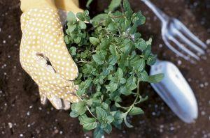 starting-to-garden-gloves
